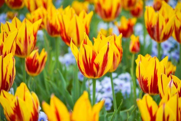 【春分の日】3月21日(木)は営業しています