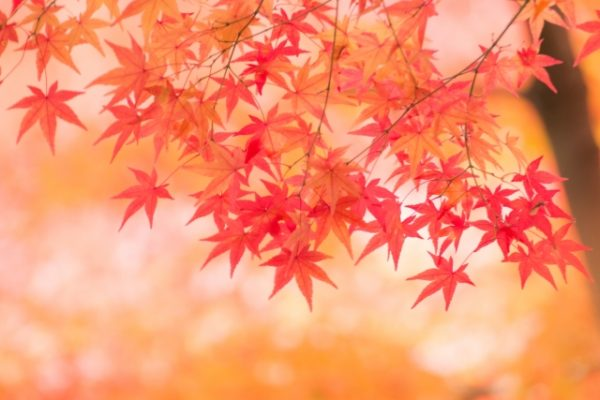 【秋分の日】9月23日(月)は営業しています